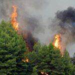 Σε ύφεση η πυρκαγιά σε δασική έκταση στη Σάμο