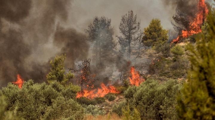 Υπό μερικό έλεγχο η φωτιά στον δήμο Θέρμης