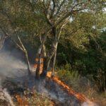 Οριοθετήθηκε η πυρκαγιά στο Πανόραμα – Δεν εκκενώθηκε οικισμός