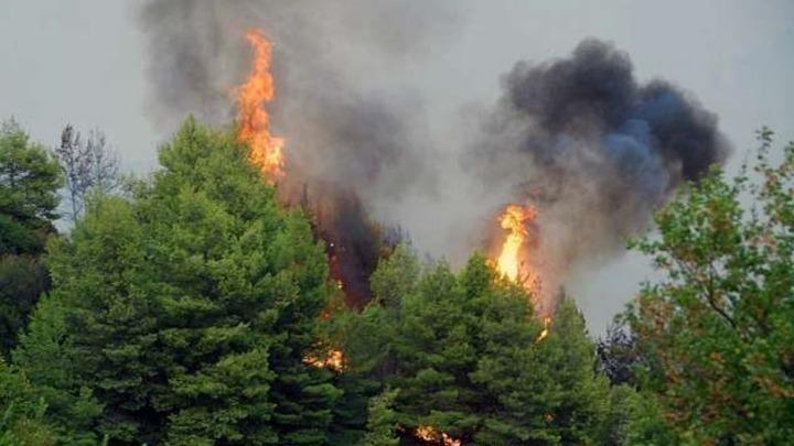 Οριοθετήθηκε η πυρκαγιά στο δήμο Πυλαίας – Χορτιάτη – Δεν εκκενώθηκε οικισμός